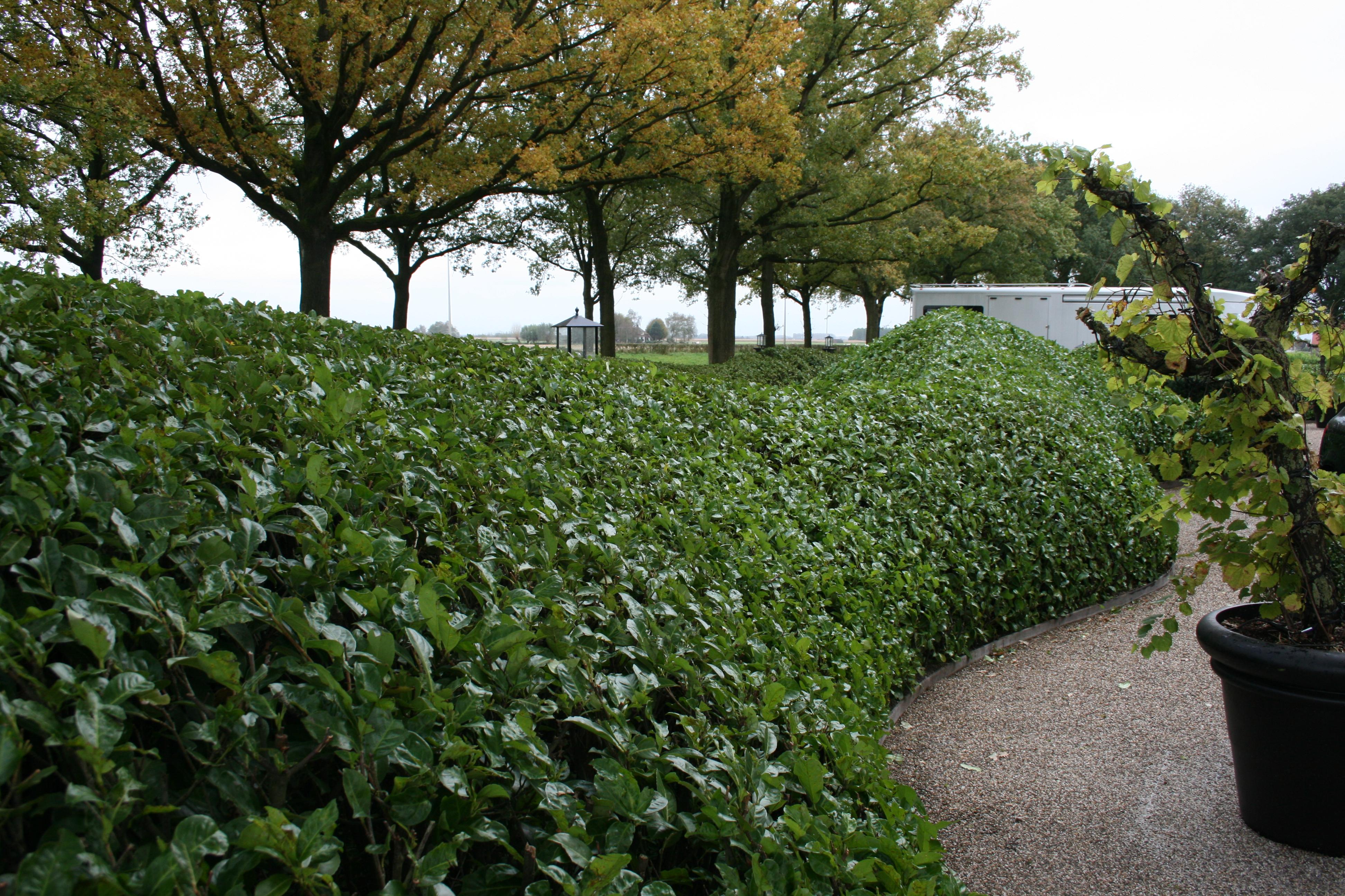 Aanleg en onderhoud particuliere tuinen